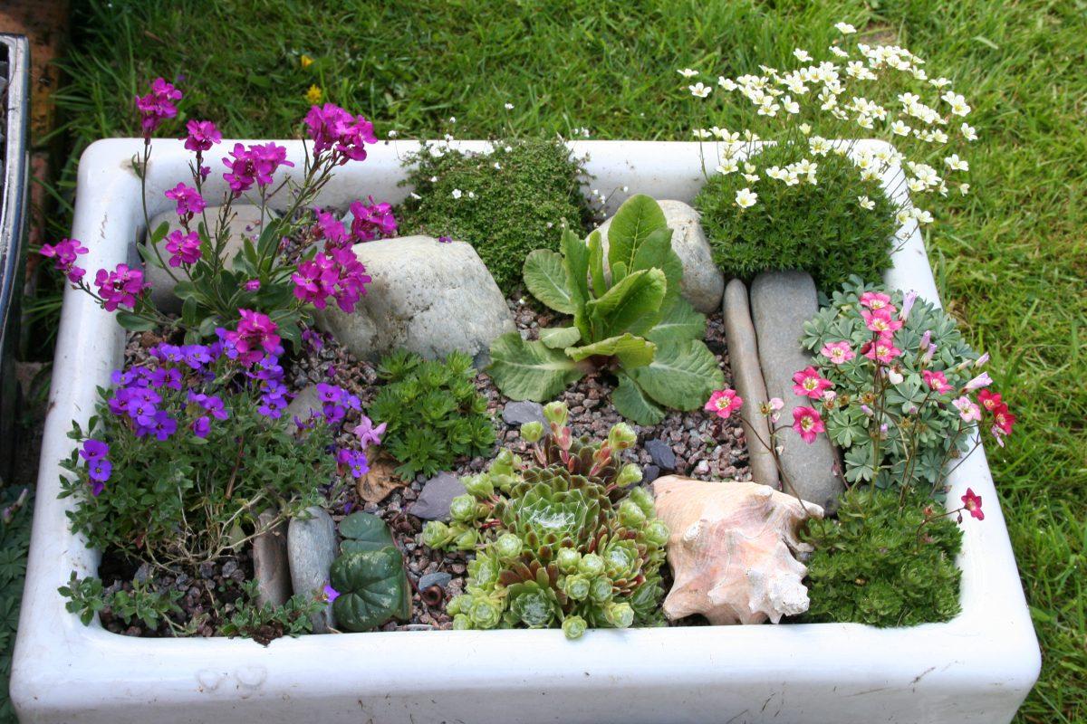 belfast sink alpine garden