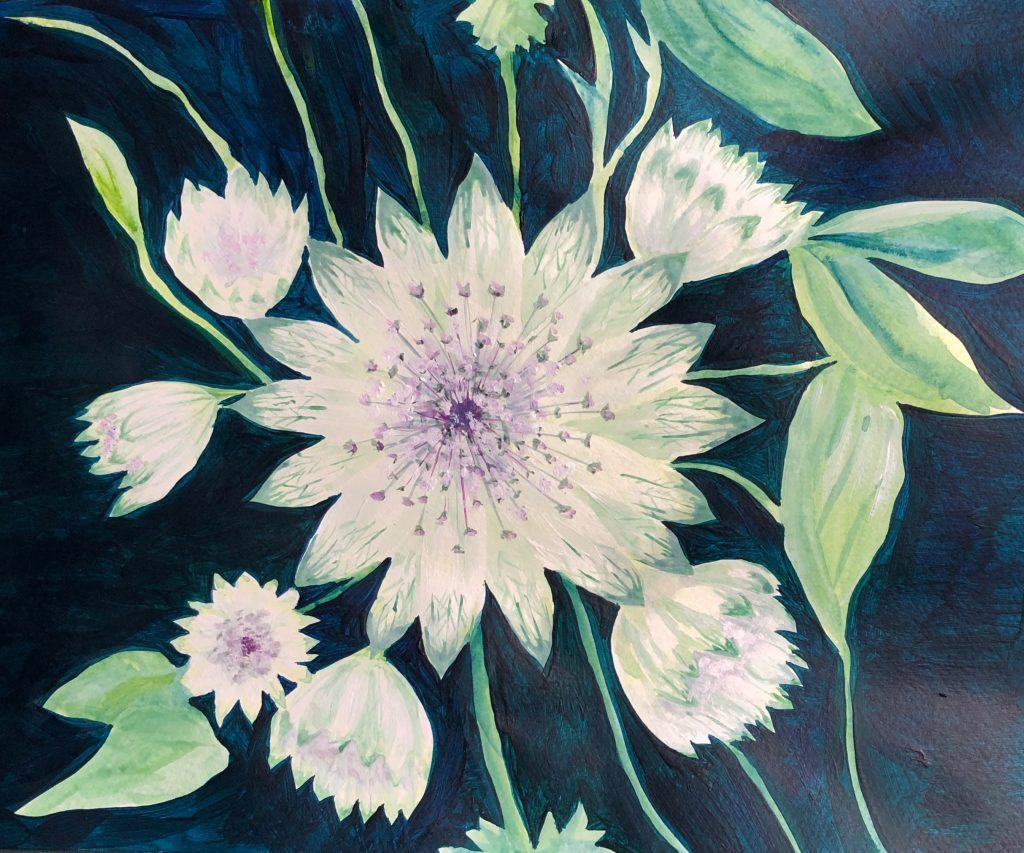 Astrantia in Acrylic paint